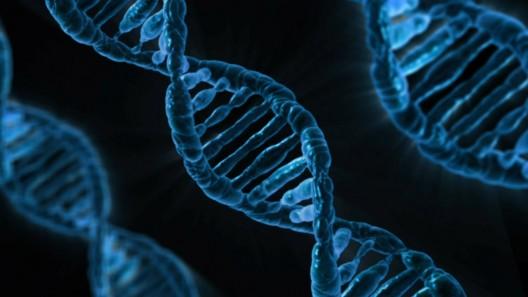 DNA (photo: Pixabay)