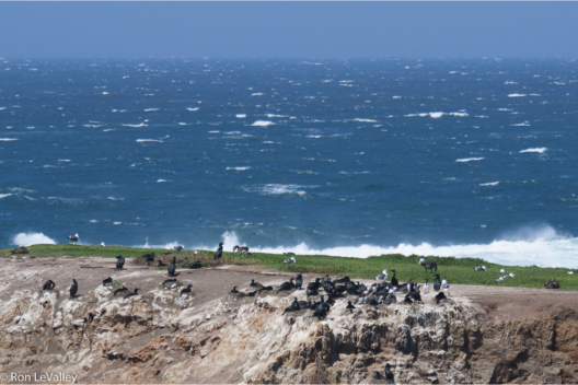 Ocean winds drive upwelling and productivity along certain coastlines. (photo: Ron LaValley)