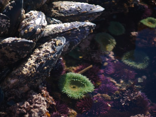 Mussels, anenomes, and urchins.