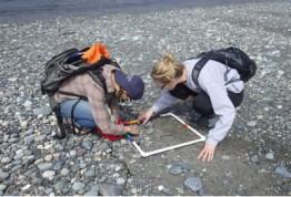 COASST volunteers counting marine debris