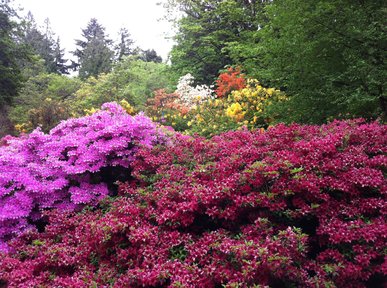 Superbe Springtime At The University Of Washingtonu0027s Arboretum