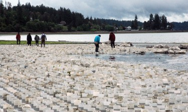 A geoduck farm in Puget Sound's Case Inlet.