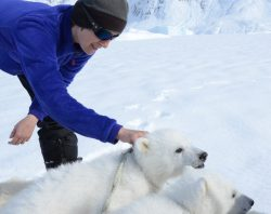 Kristin Laidre is seen with two polar bear cubs.