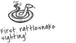 Sketch of a rattlesnake