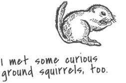 Sketch of a ground squirrel