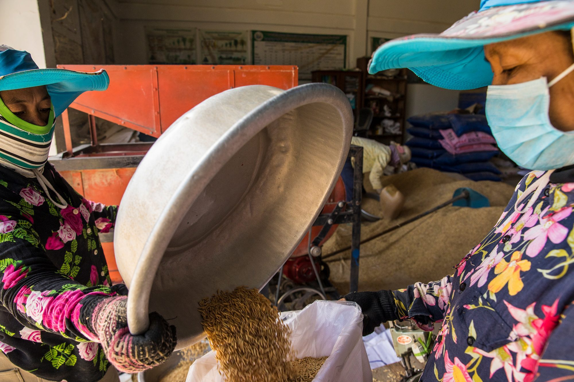 Two women pour a large metal dish of the processed rice into a large white bag to sew up