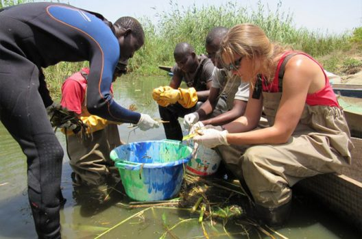 researchers processing begetation in Senegal.