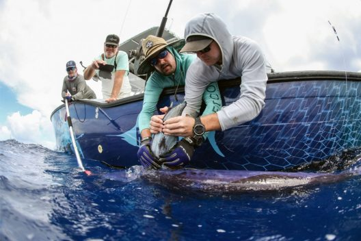 University of Washington researchers tagging a swordfish