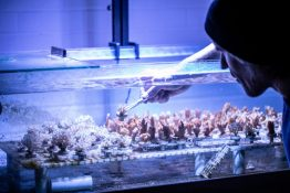 Researcher in lab studying coral