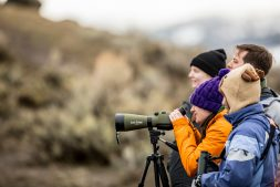 UW Professors Aaron John Wirsing and John Marzluff and UW students spend their spring break at Yellowstone National Park conducting research on otters, pronghorn antelope, bighorn sheep and common ravens. Students also track reintroduced gray wolves through the snow, set traps for bald and golden eagles.