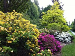 Spring is coming when the Washington Park Arbortetum's flowering plants put on a colorful show.