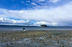 Julieta Martinelli collects oysters at Kopachuck State Park near Gig Harbor, Washington.