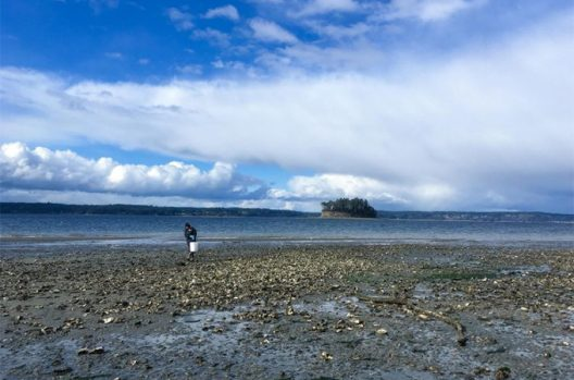 Julieta Martinelli collects oysters at Kopachuck State Park near Gig Harbor, Washington.