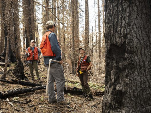 Students from Prof Brian Harvey's Lab conduct research of the Norse Fire from 2017 in the Snoqualmie National Forest.