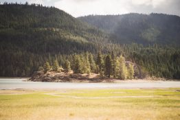 Yakama Nation field and forest.