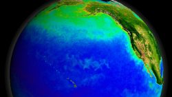 Visualization of plankton in the north Pacific Ocean