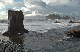 Pacific Ocean coastline along Olympic National Park.
