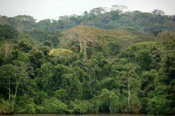 A rainforest on Panama's Barro Colorado Island