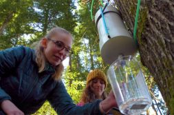 A student collects maple sap in Pack Forest